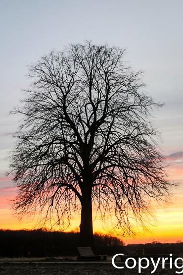 1410a Sonnenuntergang Linde Bad Laer, Remsede