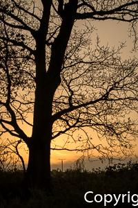 1539a Sonnenaufgang