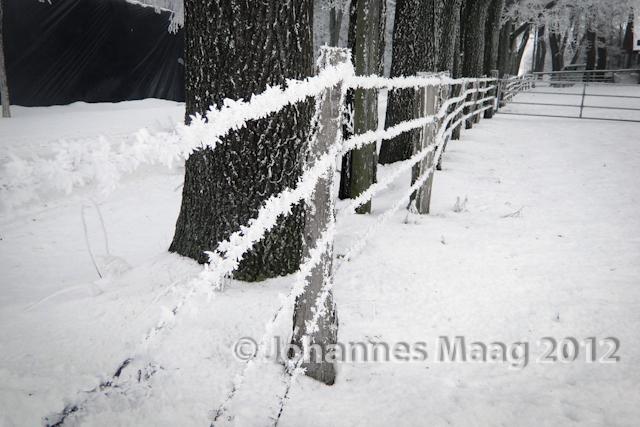 0010 Schnee am Stacheldraht