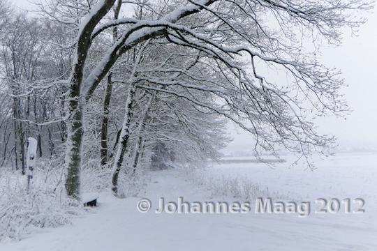 0113 Schnee am Waldrand