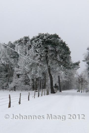 0130 Straßenallee im Schnee