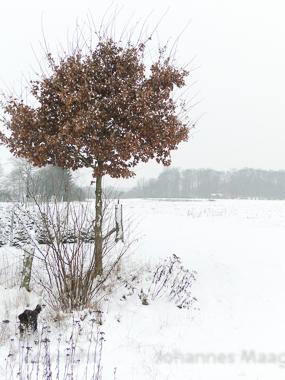0466a Laubbaum im Schnee