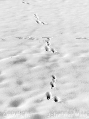 0474a Hasenspur im Schnee