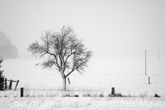 0488a Baum im Schnee