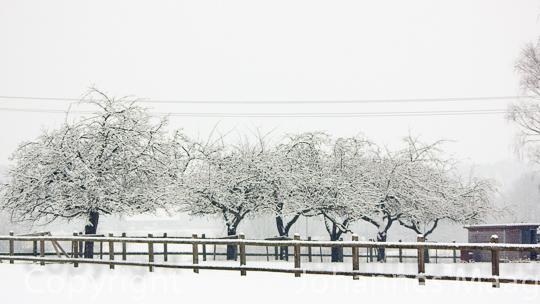 0492a Baumreihe im Schnee