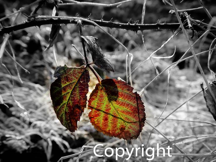 1406a Herbstblätter