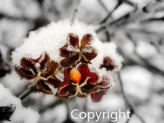 1417a Winterfrucht