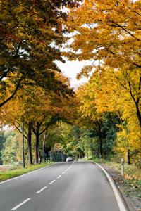 1446a Herbstbäume