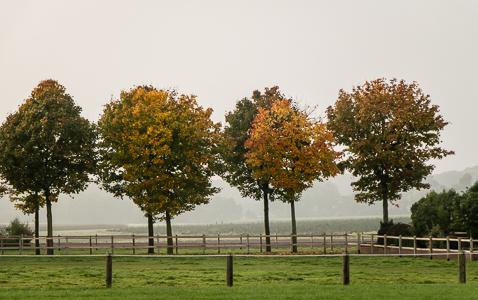 1456a Herbstbäume