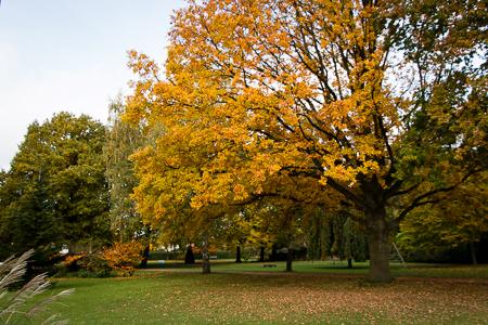1469a Herbstbäume