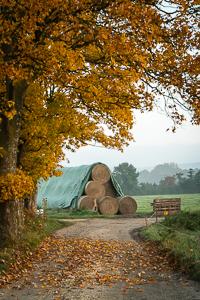 1488a Herbstbäume