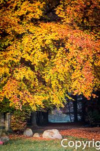 1533a Herbstbaum, Herbstweg