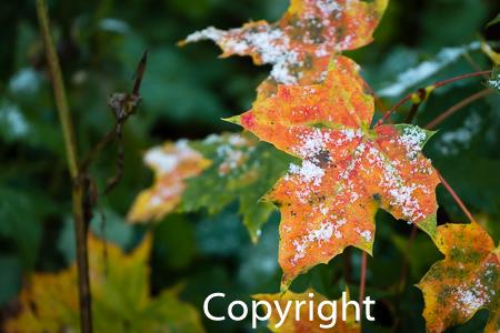 1545a Herbstblätter