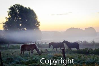 Strahlungsnebel in Remsede über Pferde