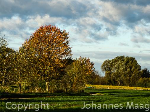 734a Herbstbäume