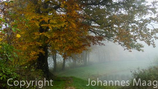 749a Herbstbäume